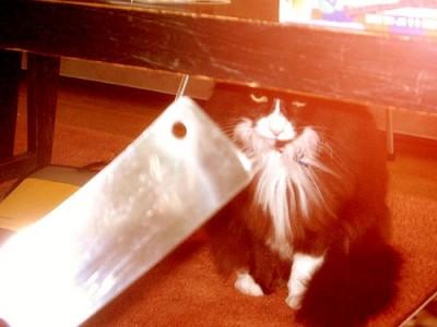 killthecat