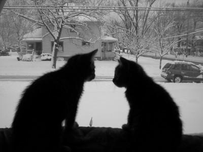 snowycats