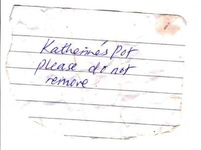 katherines pot