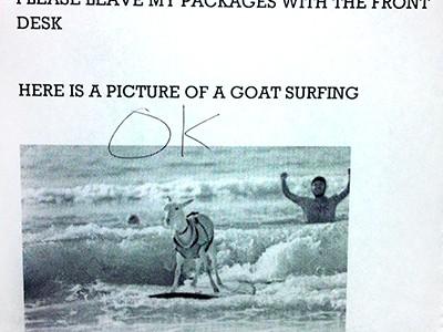 surfin_goat